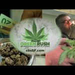 Green Rush in the Golden State: Marijuana Remakes California Economy