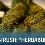 """The Cannabis Collective"" (Green Rush Episode 2)"
