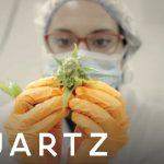 The biggest cannabis company in the world