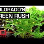 Growing medicinal marijuana in the Rocky Mountain state | 60 Minutes Australia